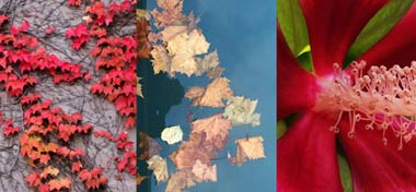 Photos of Flowers, Vines, and Autumn Leaves